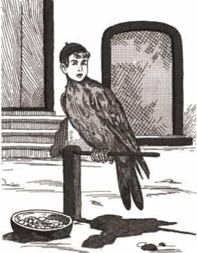 الغراب-الطائر