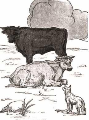 قصة-جحا-الثعلب-يقنع-الثيران